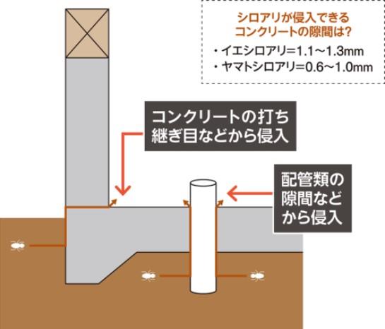 ベタ基礎のわずかな隙間をついて侵入