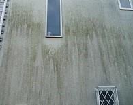外壁モルタルにカビがある住宅